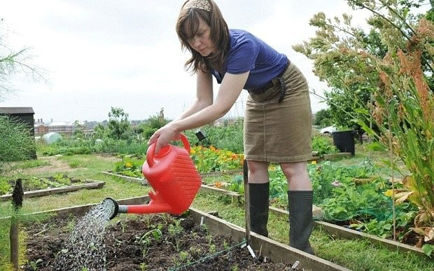 How, when and where to grow superfoods in your garden