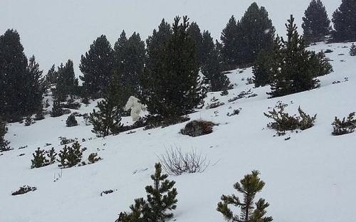 'Yeti' caught on camera in Spanish ski resort