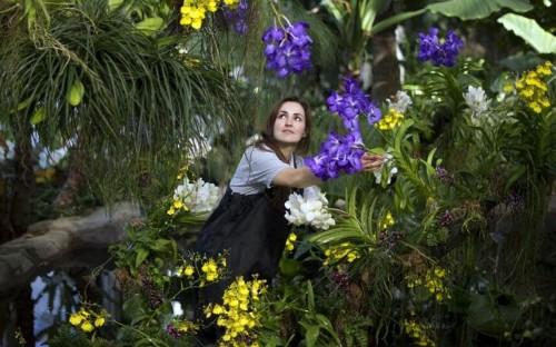 Britain's best conservatories to visit in winter - Telegraph