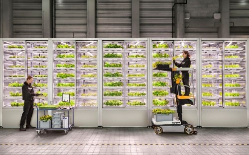 What does the future of vegetable growing look like?