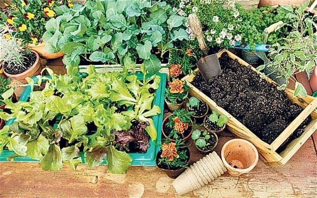The garden centre where bigger plants are better