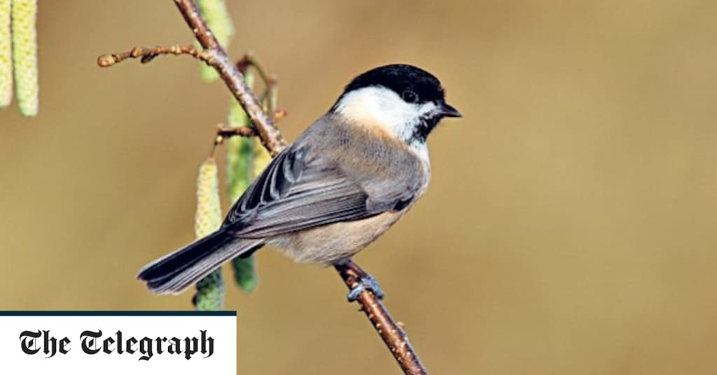 Could 'messy areas' in the garden be the key to saving the UK's most endangered birds?