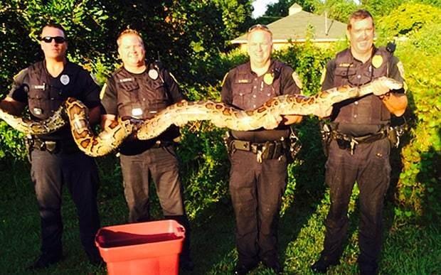 Burmese python suspected of eating neighbourhood cats caught in Florida