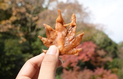 Edible leaves and mushrooms galore: 10 of the world's tastiest autumn holidays