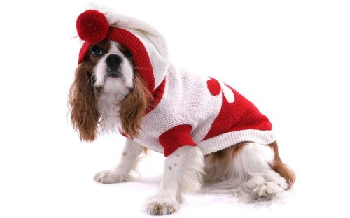 Dogs in Christmas jumpers is this December's most adorable trend