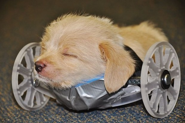 Two-legged rescue puppy gets 3D-printed wheelchair to help him walk