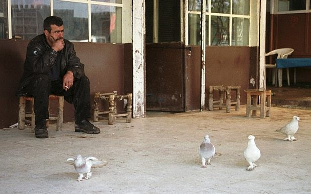 Isil bans pigeon breeding to stop women being seen on roofs