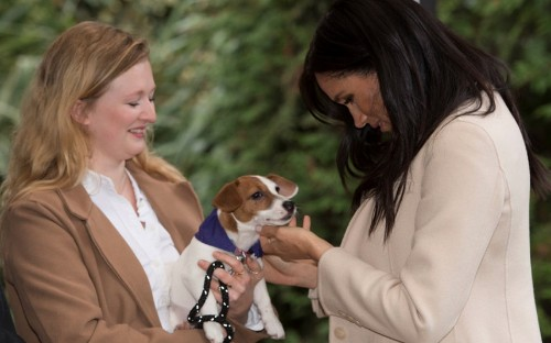 Duchess of Sussex falls in love with rescue puppy and is called a 'fat lady' during visit to animal shelter