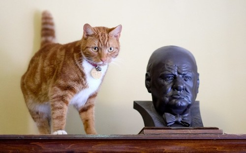 International Cat Day - Telegraph