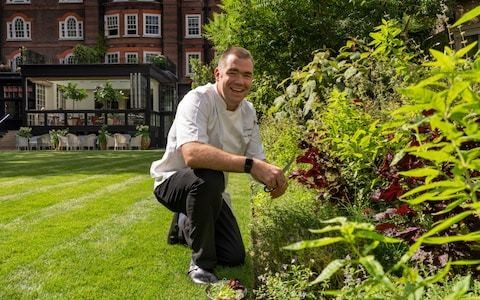 Inside the garden of the Goring Hotel, where Michelin-starred chef Nathan Outlaw and herb expert Jekka McVicar are sprouting something special