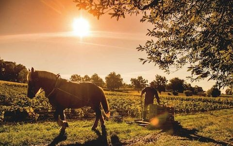 Is your fine wine eco-friendly? Why sustainability is the new luxury in fine wine