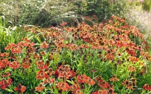 Amazingly colourful autumn borders to inspire you - Telegraph