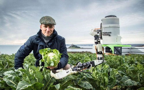 Meet the robot lending a cyber-hand to Cornwall's cauliflower harvest