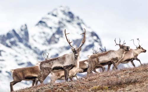 Photographer Tim Plowden travels Alaska in search of elusive wildlife - Telegraph