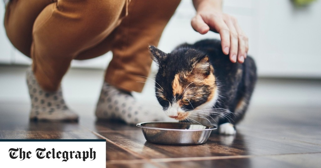 Can you ever stop your cat absconding and moving in with another family?
