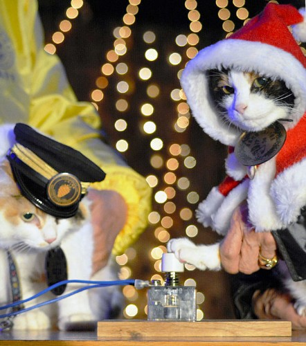 Cat stationmaster Tama mourned in Japan and elevated as goddess