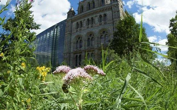 Anger over Natural History Museum plans to bulldoze wildlife garden