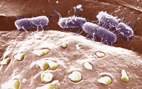 Superbugs: New stain of 'highly' drug resistant typhoid detected