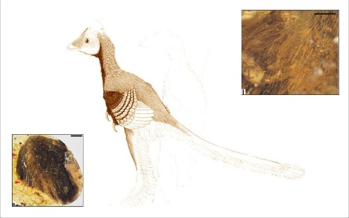 Near perfect dinosaur bird wings found encased in amber