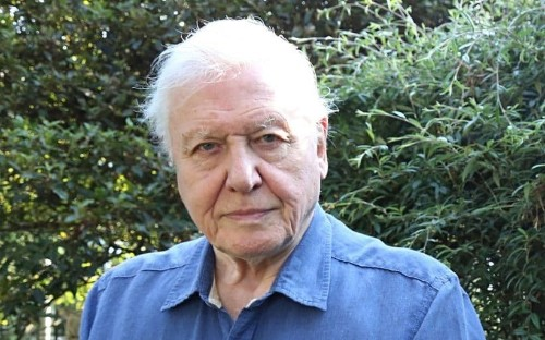 David Attenborough says the BBC still needs 'white men explaining things' to audiences