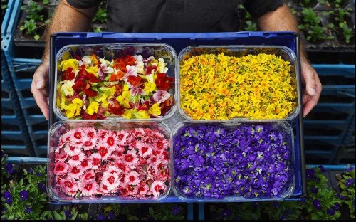 Picking edible flowers? Make sure you choose carefully