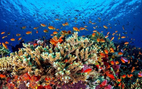 Australian prime minister unveils £500m plan to save the Great Barrier Reef