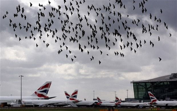 Bird strikes damage three aircraft a week