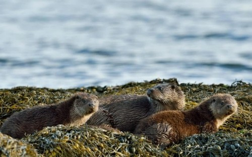 Teenage swimmers attacked by angry otters in California