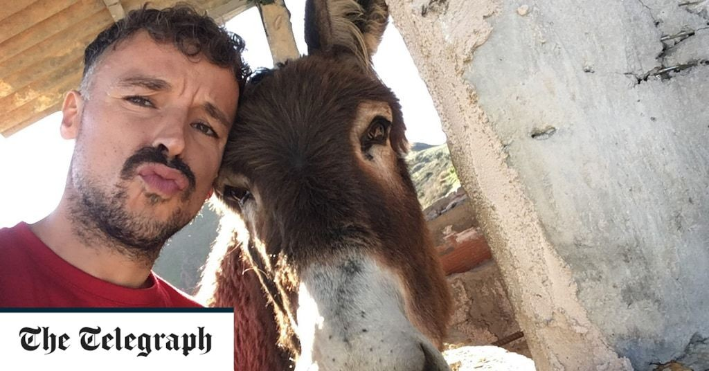Legal battle over image rights to Spanish donkey who became a star after tearful reunion with owner