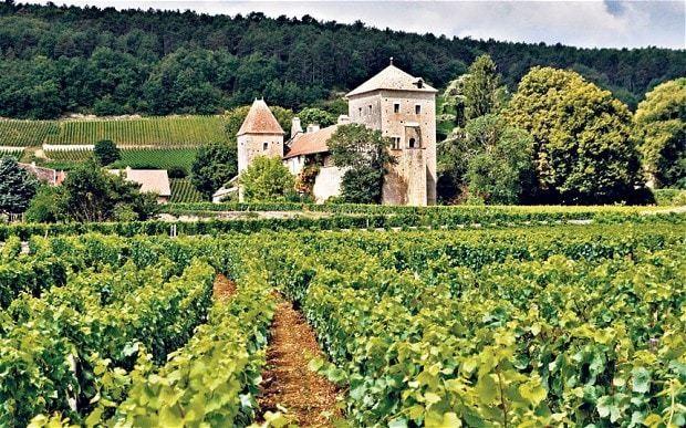 Burgundy: the best new bottles to treasure