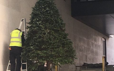 BBC cut down their Christmas tree in 'embarrassing' decision
