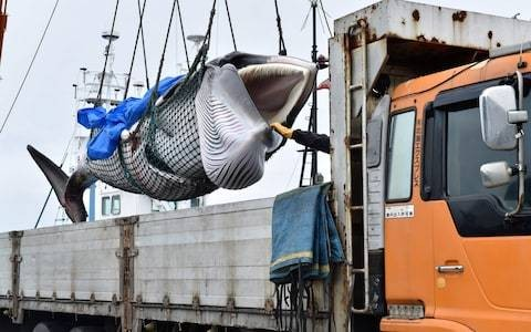 Japan's whaling ships set sail into a storm of controversy