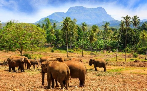Sri Lanka: geography from heaven and history from hell
