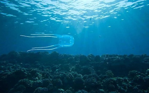 Boy dies from box jellyfish sting in Thailand