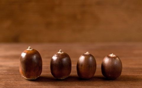 Cancer-fighting, gut-boosting... how acorns became the new superfood