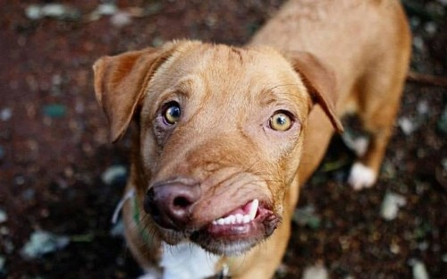 Picasso the dog flooded with adoption offers and will be given surgery after his pictures go viral