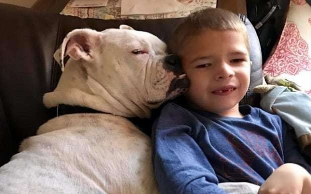 Non-verbal boy's special bond with deaf dog captured in heartwarming photo