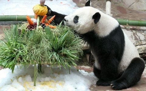 China sends team to investigate panda death at Thai zoo accused of poor care