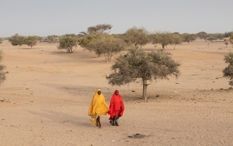 Climate change and insecurity: David Miliband warns of double threat in Lake Chad region