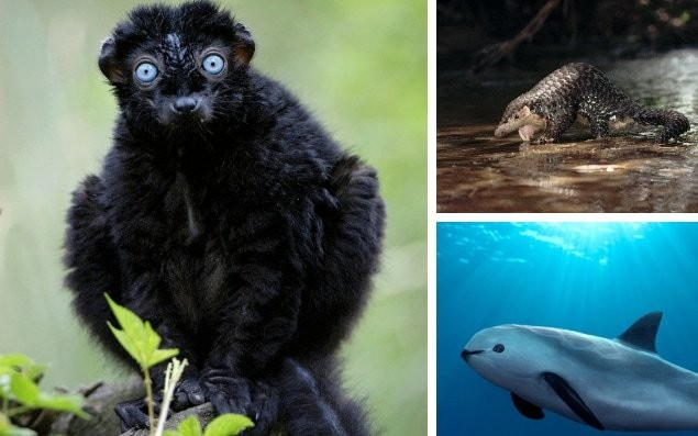 The vanishing animals that future generations will never see