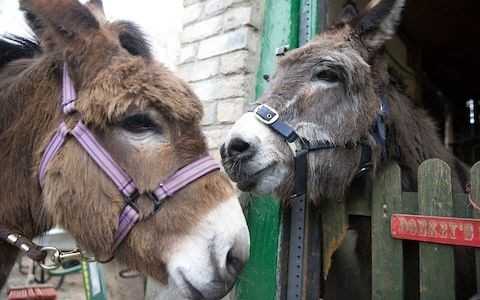 China 'medicine' demand threatens to halve world donkey population