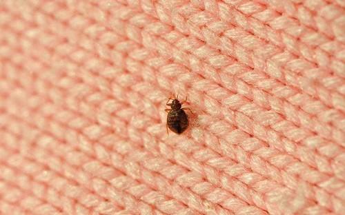 Travellers warned over bed bug superstrain 'epidemic'