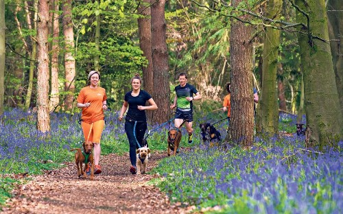 Running with your dog: Helen Foster hits the trail and tries canicross