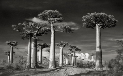 Ancient Trees: Portraits of Time by photographer Beth Moon
