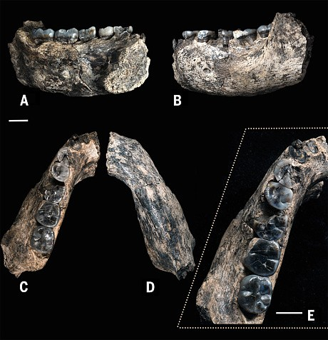 First human? Jawbone fossil in Ethiopia sheds light on human origins