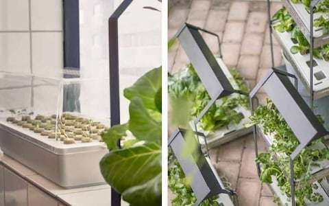 Hydroponics: can you really grow without soil at home?
