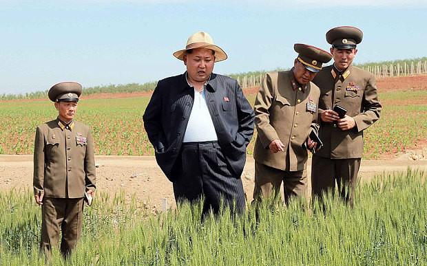 North Korea launches Choco Pie counter-strike