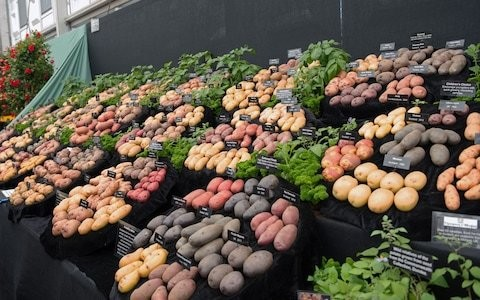 The best potatoes: by a man with 500 to choose from