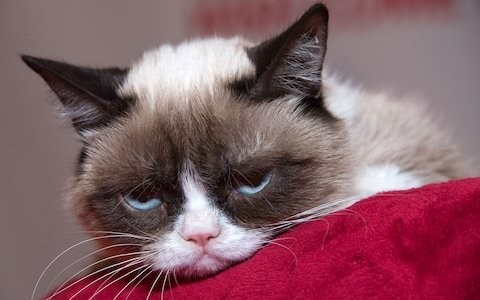 Grumpy cat: fans mourn as internet-famous pet dies aged 7