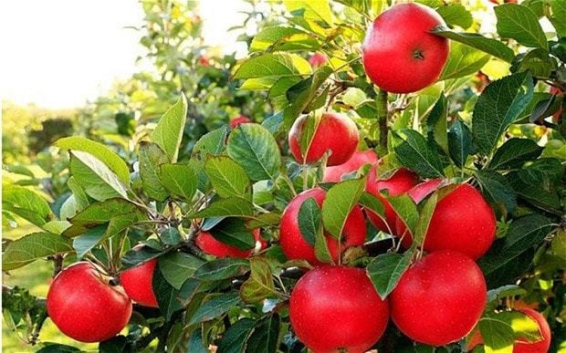 Garden masterclass: how to care for summer fruit